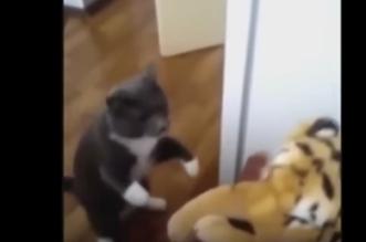 مصارعة بين قط ونمر دمية