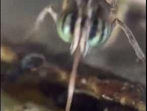 معركة بين نملة وفراشة