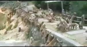 معركة قرود