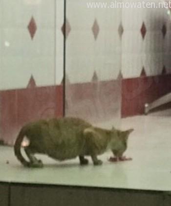 ملحمة-تطعم-قطط (5)