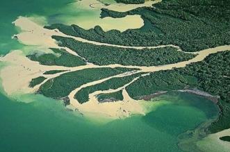 لماذا سكان مناطق مصبات الأنهار في خطر؟ - المواطن
