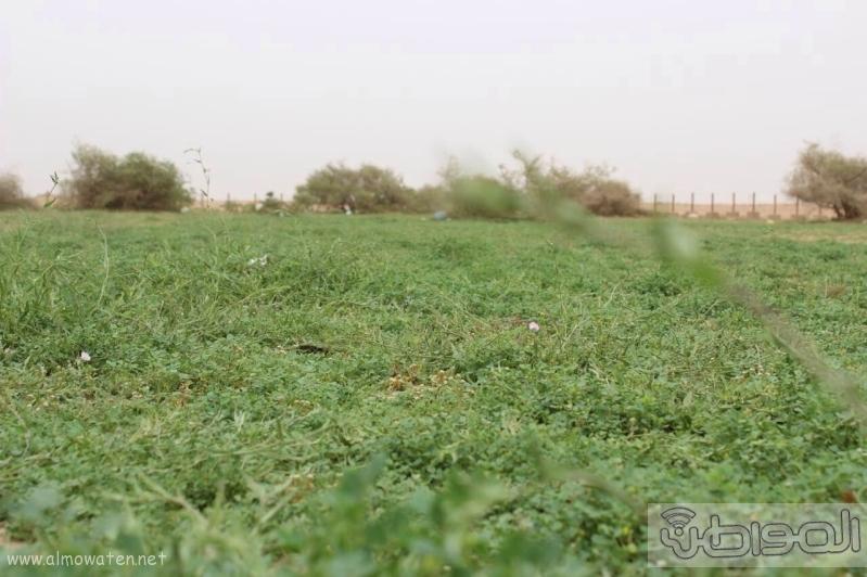 منتزه أم العصافير (1)