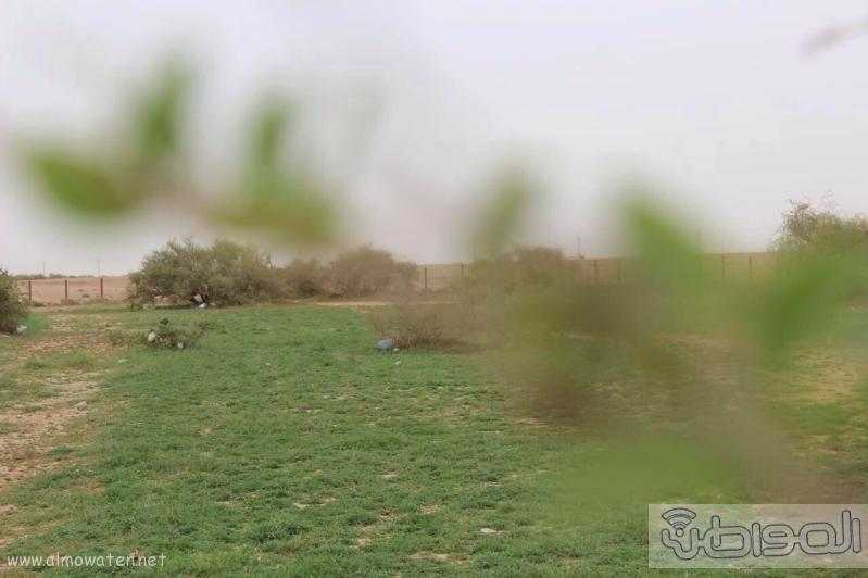 منتزه أم العصافير (210212277) 