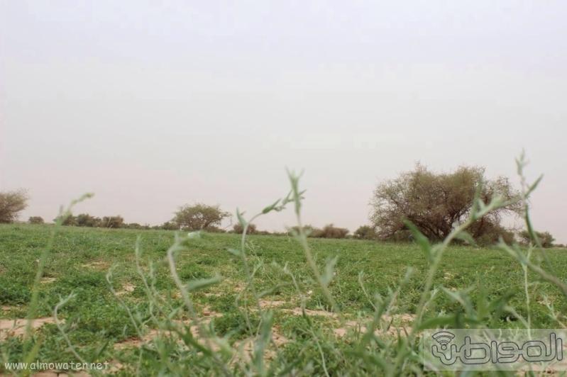 منتزه أم العصافير (210212283) 