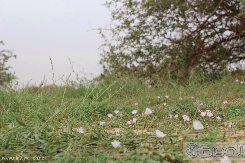 منتزه أم العصافير (210212286) 