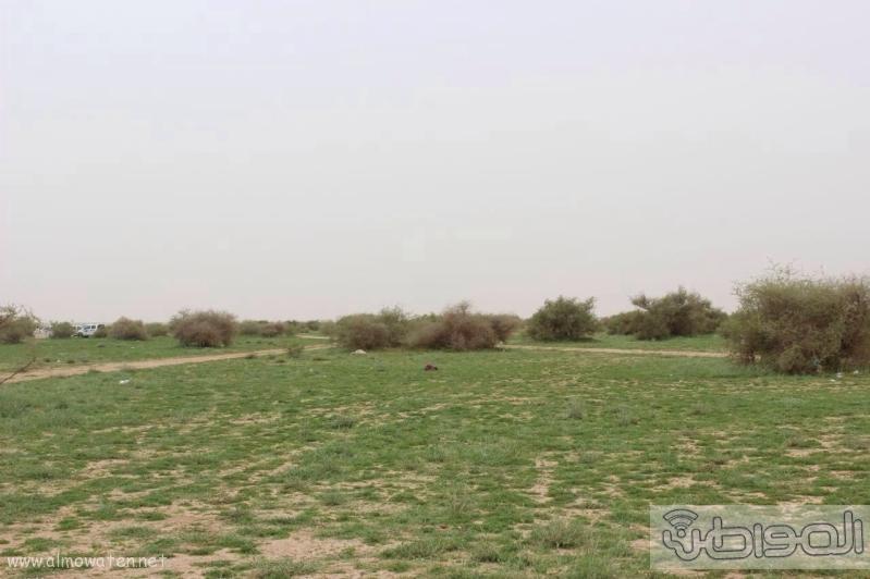 منتزه أم العصافير (210212288) 