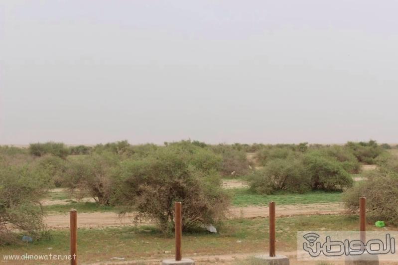 منتزه أم العصافير (210212289) 