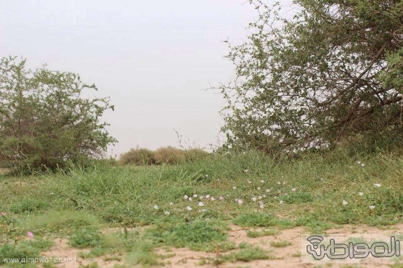 منتزه أم العصافير (210212295) 
