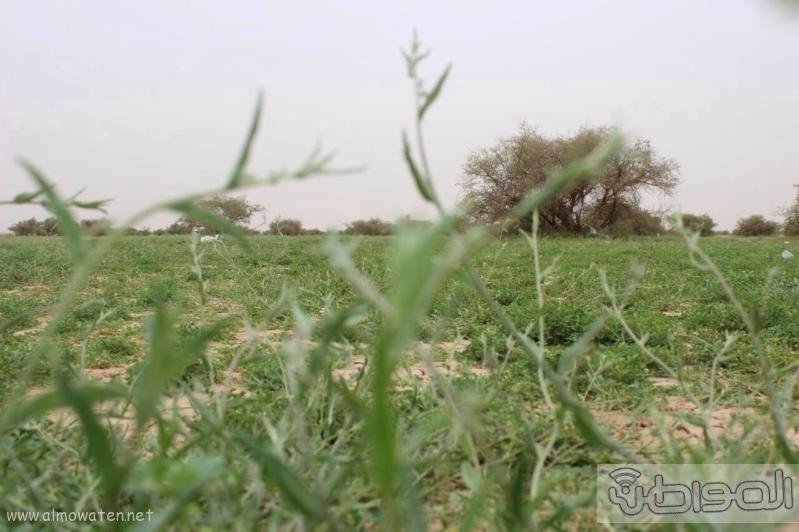 منتزه أم العصافير (210212296) 
