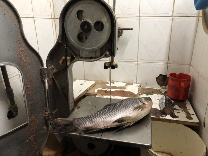 صور صادمة.. منزل شعبي بالمدينة يستخدم لتخزين اللحوم والأسماك - المواطن