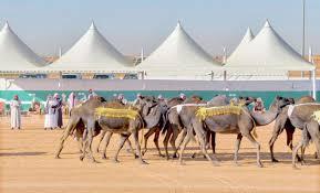 مهرجان الملك عبدالعزيز للإبل 5