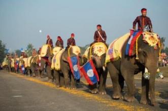 موكب للأفيال في لاوس.. أرض المليون فيل - المواطن