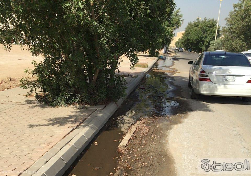 مياه الصرف الصحي تؤرق أهالي حي الورود بجدة (3)