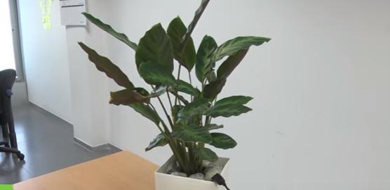 نبات يشحن نفسه