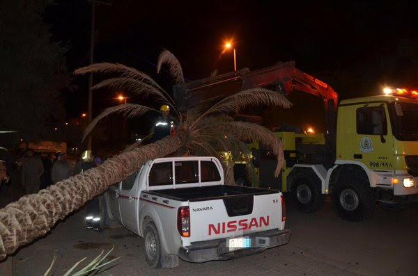 نخلة تحطّم إحدى السيارات بسكاكا1