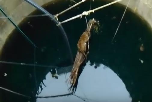 نمر سقط في بئر بالهند