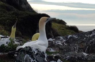 الطائر الأكثر وحدة في العالم يلفظ أنفاسه عشقًا وسط سرب مزيّف - المواطن