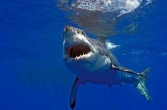هجمات زائدة من أسماك القرش!