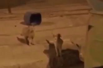 فيديو.. شباب يسخرون من هروب أسد حفر الباطن - المواطن