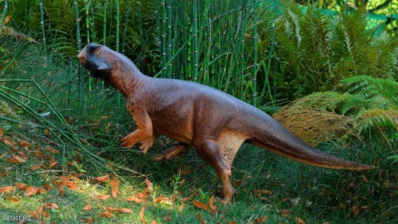 الديناصور الجميل