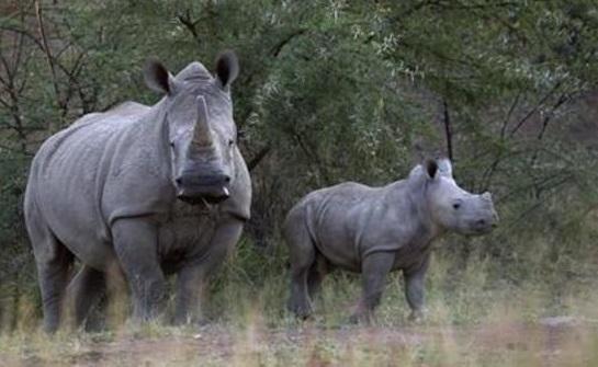وحيد-القرن