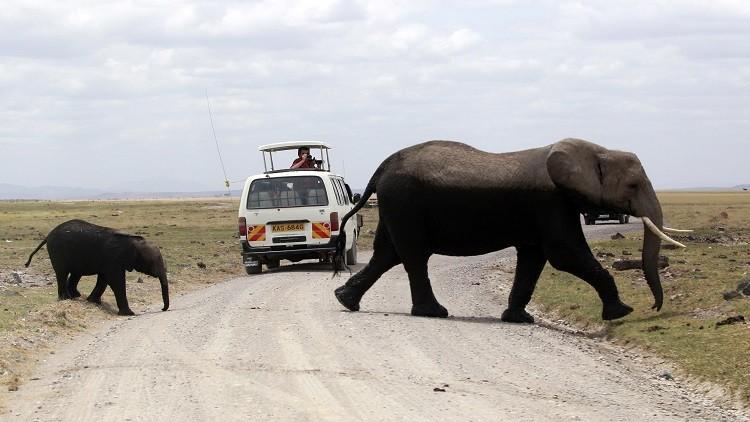 وسيلة غريبة لاتقاء شر الفيلة في تنزانيا
