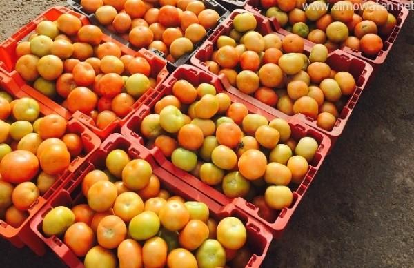 80 ريالا سعر سلة الطماطم بسراة عبيدة ! - المواطن