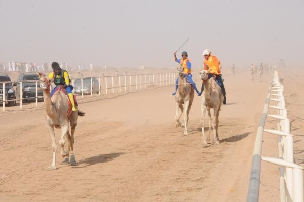 سباقات الهجن بالطائف تشهد متابعة المهتمين والزوار - المواطن
