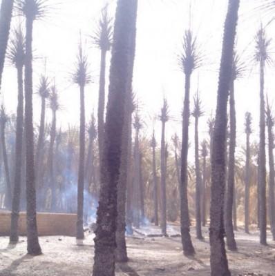 حريق هائل في مزارع بمحافظة تيماء - المواطن