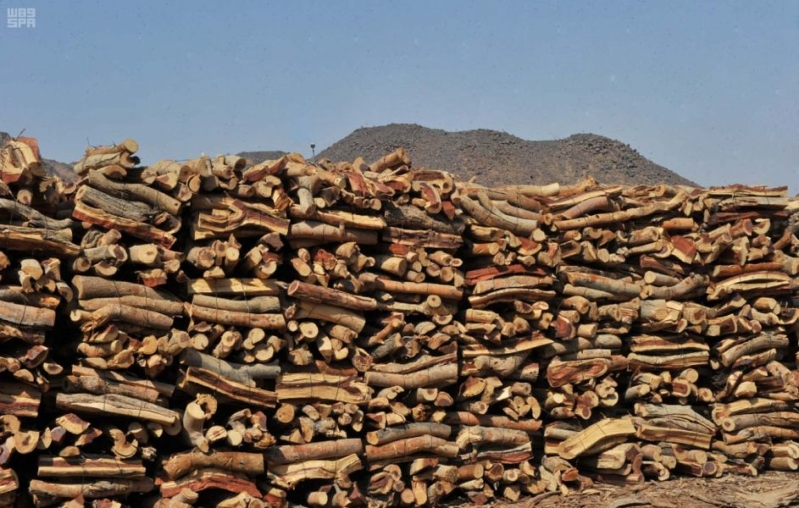 مصادرة 21 طنًّا من الحطب في أسواق السيح