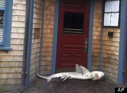 Nantucket Land Shark