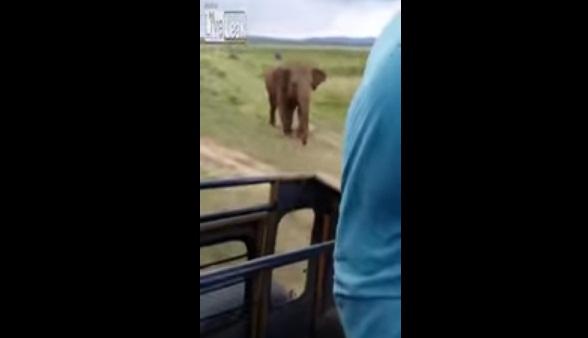 #تيوب_المواطن :فيل غاضب يرعب زوار حديقة مفتوحة - المواطن