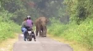 #تيوب_المواطن : فيل غاضب يطارد رجلين في غابة بتايلند - المواطن