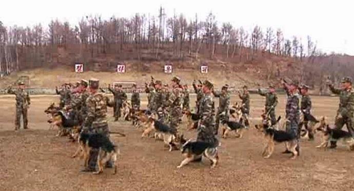 1دكتاتور كوريا يأمر جائعيها بقتل الكلاب وأكل لحومها