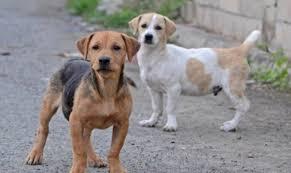 الكلاب أكثر اجتماعية من الذئاب وهذا السبب! - المواطن