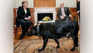 #بوتين : لم أقصد إخافة #ميركل بكلبي الأسود