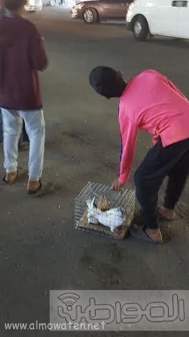 بالصور.. جولة في سوق الأسماك وطيور الزينة بـ #جدة