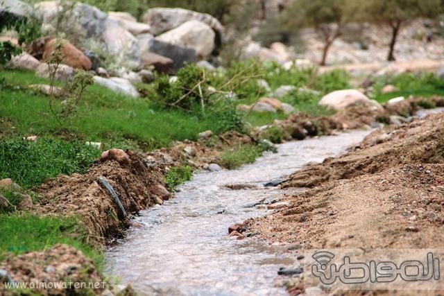 جبال الشفا بمحافظة الطائف12