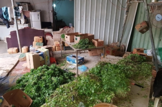 بالصور.. مصادرة 40 كرتون خضروات متعفنة قبل توزيعها في مكة - المواطن