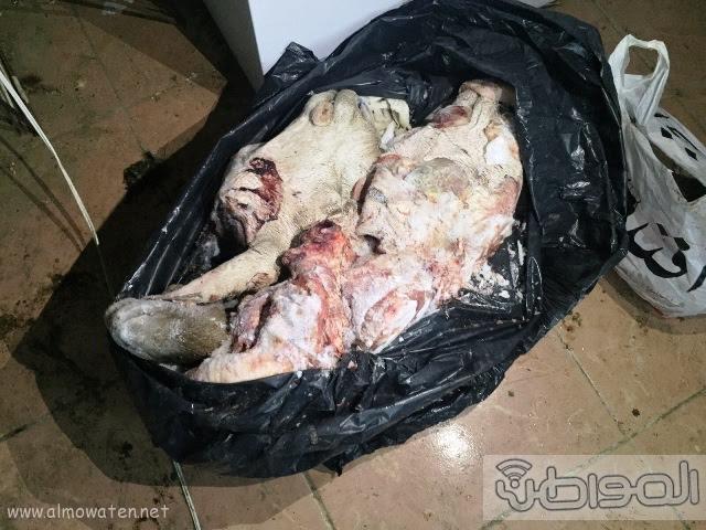 في #الطائف .. سوريون يوزعون لحوماً فاسدة على مطاعم شهيرة20