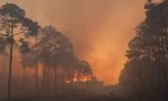 بالصور.. حرائق تجتاح الغرب الأميركي وإجلاء المئات من السكان - المواطن