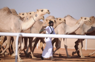 فهد بن حثلين يعلن موعد مهرجان الملك عبدالعزيز للإبل 3 - المواطن