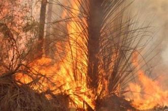 حريق هائل يلتهم أشجار ونخيل الديسة بمحافظة ضباء - المواطن