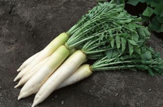4 أعشاب هي الأكثر فائدة للجسم - المواطن