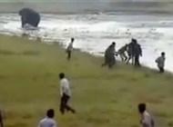 بالفيديو.. فيل غاضب يطارد رجلاً ويقتله دعساً - المواطن