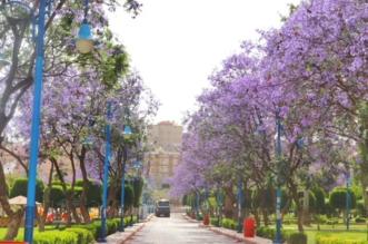 بالصور.. 3 ملايين وردة و6700 شجرة تنتظر زوار حدائق أبها - المواطن