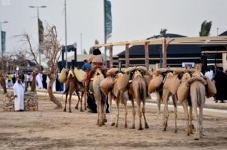 سوق عكاظ يَسرُد قصص تاريخ العُظماء العرب وأمجادهم قديمًا - المواطن