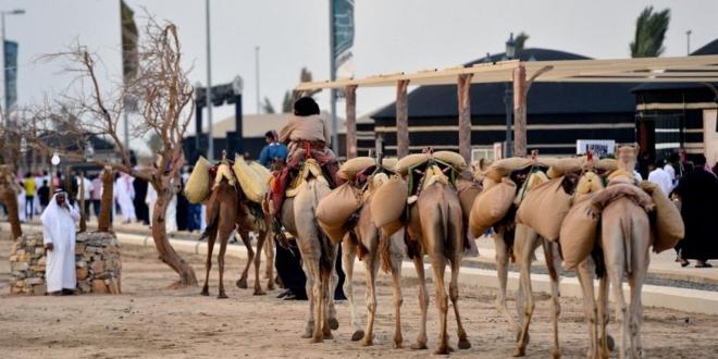 سوق عكاظ يَسرُد قصص تاريخ العُظماء العرب وأمجادهم قديمًا   صحيفة المواطن الإلكترونية