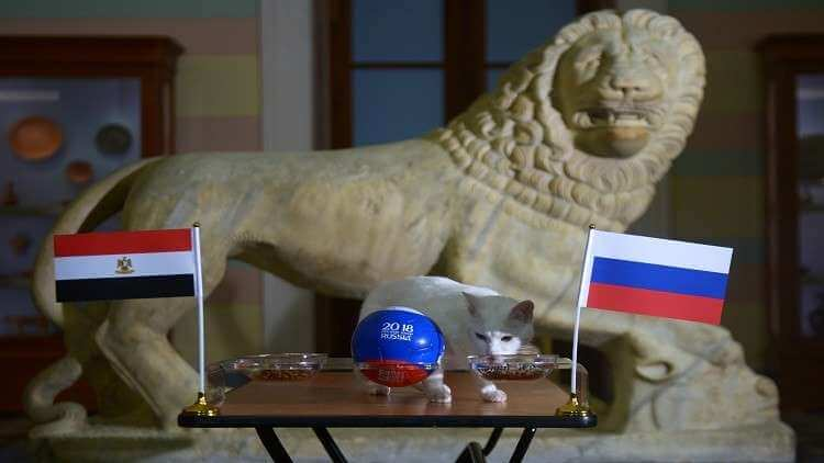 بالفيديو .. القط أخيل يحدد هوية الفائز في مباراة مصر وروسيا