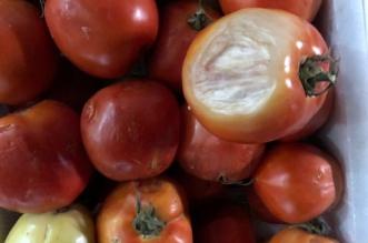 وزارة الشئون البلدية والقروية تكشف سر السيارات الـ3 والطماطم الفاسدة في تبوك - المواطن